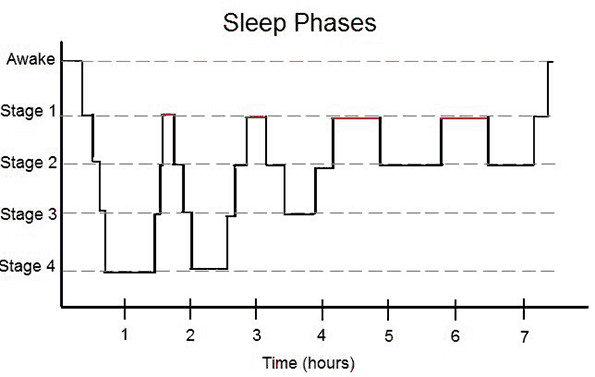 sleep phases chart