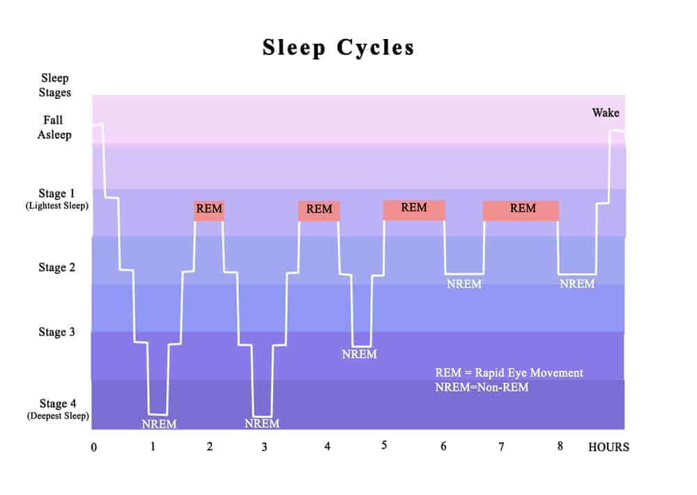 cycles of sleep