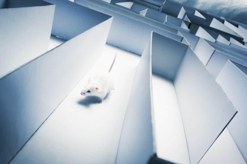 mouse maze